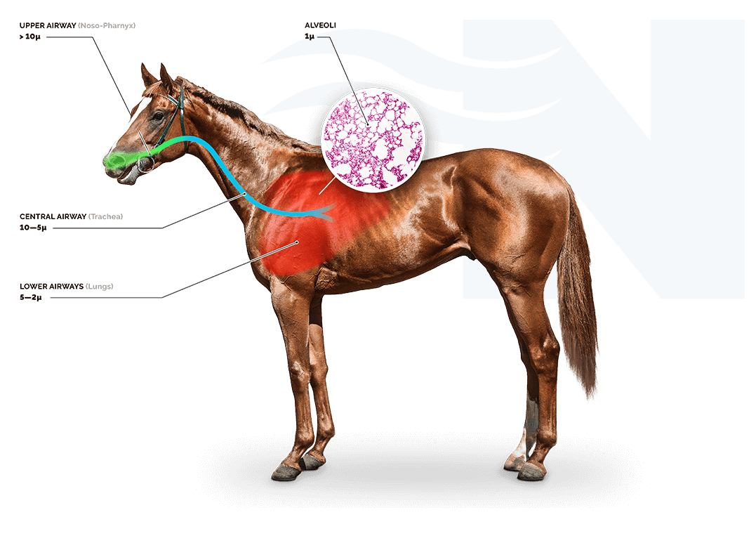 Nortev Horse Breathing Diagram 1