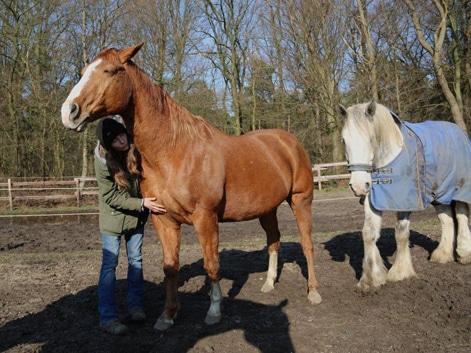 Pferdehilfe Bilder